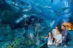 duba-aquarium-tunnel