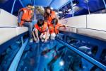 dubai-aquarium-glass-bottom-boat