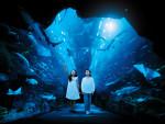dubai-aquarium-kids