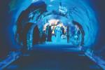 dubai-aquarium-tunnel