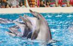 dubai-dolphinarium-e1519221244544-1200x750