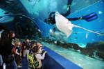 sharjah-aquarium-1